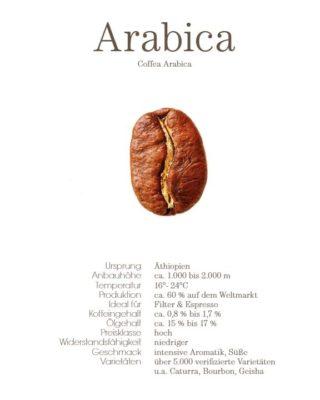 Arabica Bohne Profil