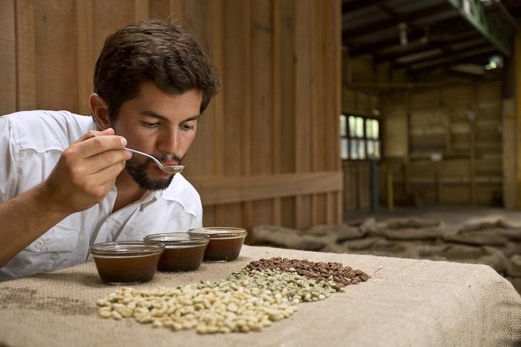 ann probiert mit Löffel Kaffee aus drei Gläsern, die auf einem Tisch stehen, auf dem ungeröstete Kaffeebohnen ausgebreitet sind