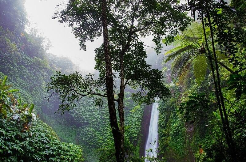 Regenwald Blog - So kann Kaffee Regenwald retten
