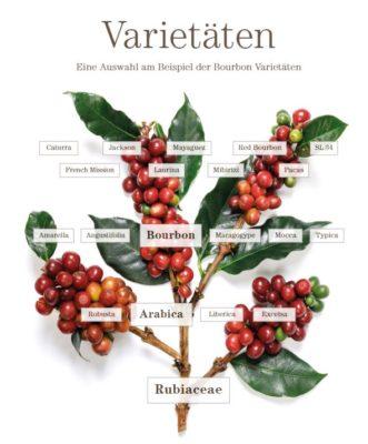 Kaffeevarietaetenbaum