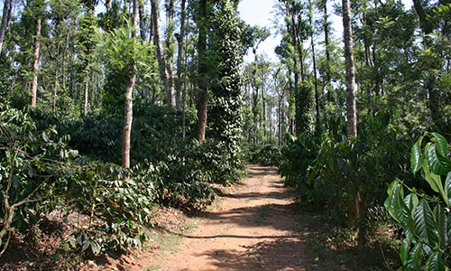 malabar sub 01 1 - Malabar, Monsooned, Indien