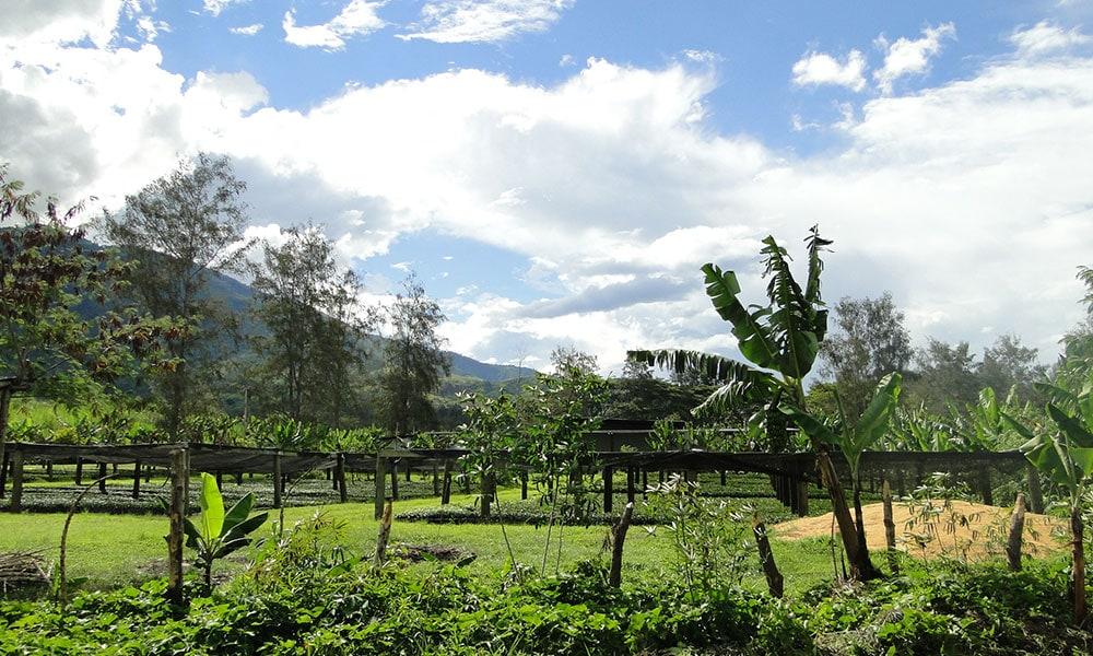 murnauerkaffeerösterei kaffees hiddenvalley guinea - Hidden Valley, Neu Guinea - Bio